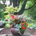 A colorful container shade garden