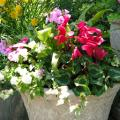 Colorful summer container gardens