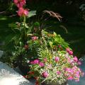 Using similar color schemes with different plant materials in grouped container gardens