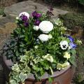 Container gardens provide early season color to your home in spring