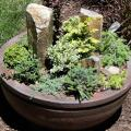 Unique miniature plants and succulents, with natural stone in container garden