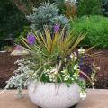 Colorful colors and textures with mixed plants and flowers in an easy to care for container garden