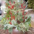 Winter holiday evergreen container garden